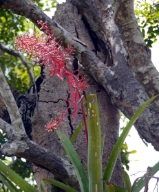 Tree orchids everywhere